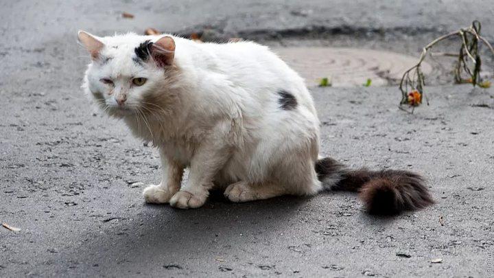 ВЛисках мужчина бросал кошку обасфальт наглазах уребенка