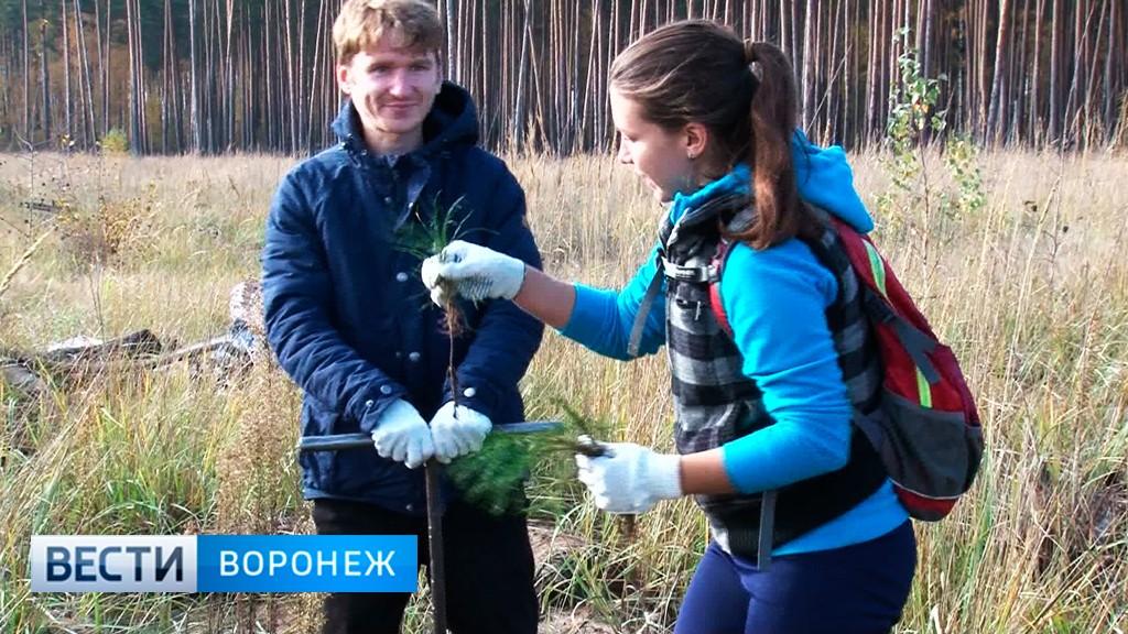 Воронежцев пригласили высадить сосны иберёзы наКожевенном кордоне