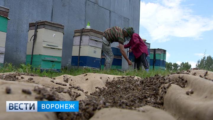 http://vestivrn.ru/images/uploads/1531311830.jpg