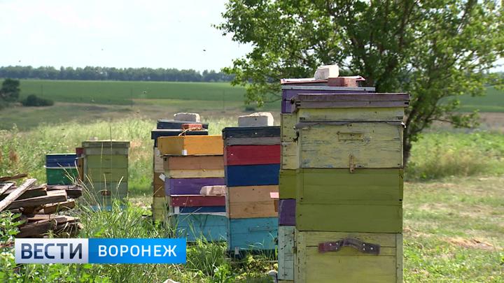 http://vestivrn.ru/images/uploads/1531311990.jpg