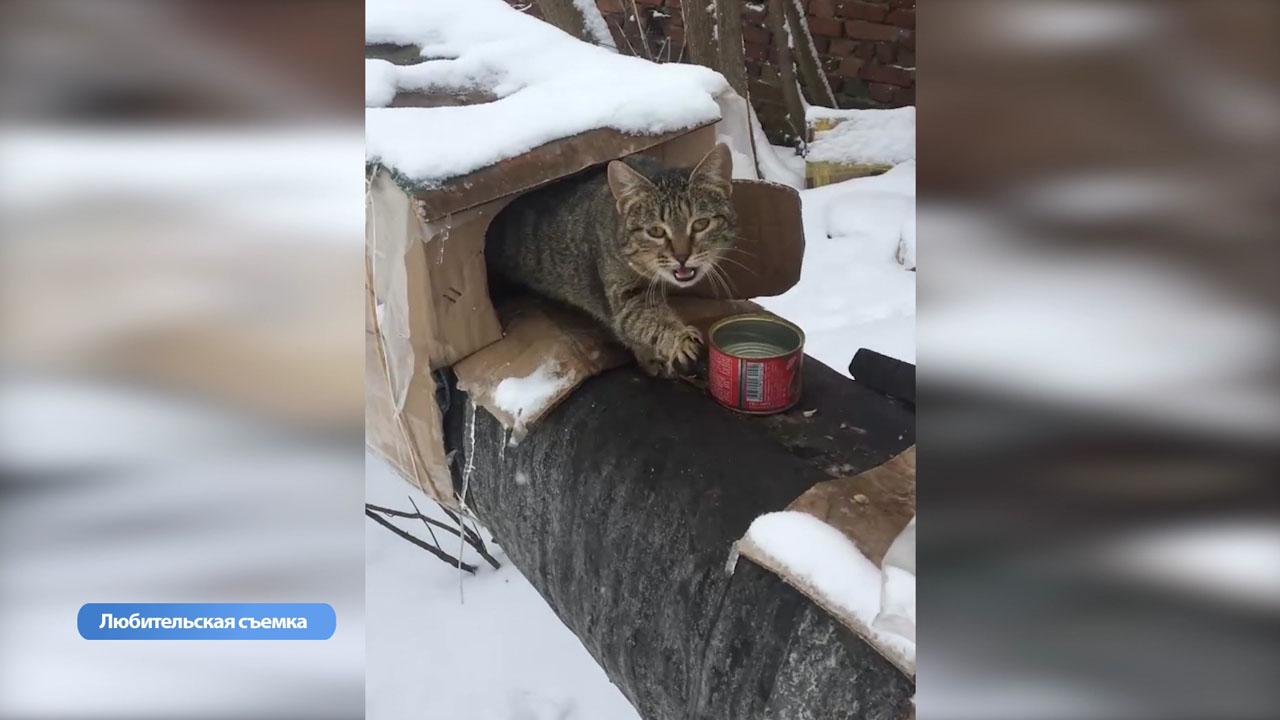 титры в анализе на коронавирус у кошек